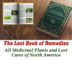 book of lost remedies